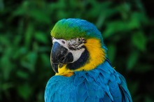 parrot-320006_1280