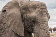 elephant-1526709_1280